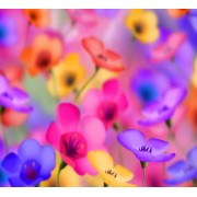 colorful flowers +110